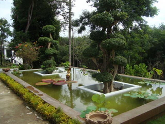 Fish pond phuket property phuket property for Garden pond reddit